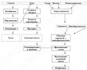 Линия   производства подсолнечной халвы производительность 100 кг/час c технологической схемой